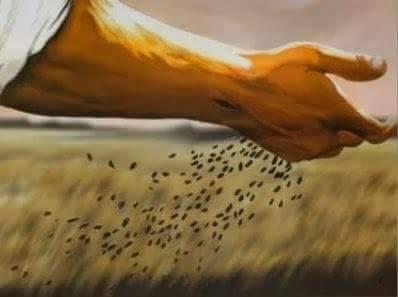A importância do pequeno. Por uma Igreja menos  poderosa e mais próxima.   Mt 13,24-43